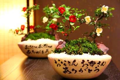 新郎様、新婦様お二人で両家のご両親様へ二鉢のギフトを制作する。長寿梅を紅白で四本植え盆栽仕立てに。納期は標準納期の4週間の例。
