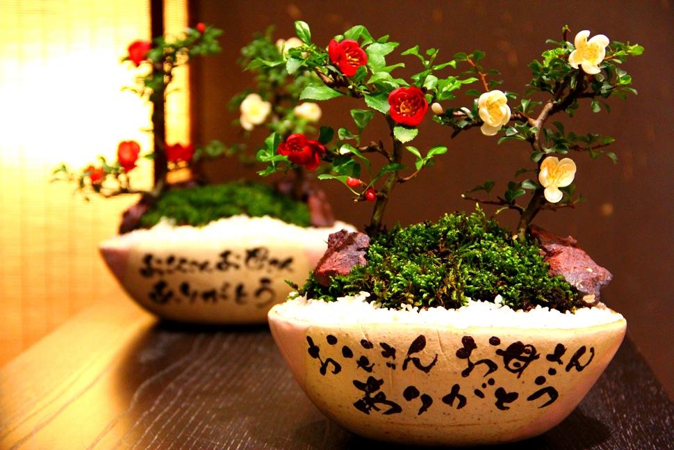 結婚式で両親へのプレゼントに 苗木を贈るなら、四季で絆を育む 感謝の苗木鉢